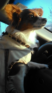 Belle driving