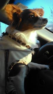 Belle driving